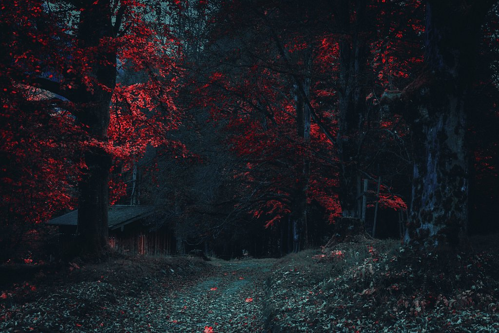 in the dark forest
